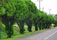 Arbres verts sur le bord de la route photographie stock libre de droits