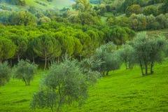 Arbres verts sur le champ vert Image stock