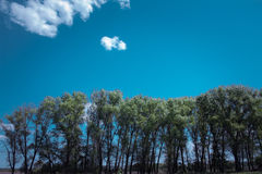 Arbres verts sur le ciel bleu Style minimaliste Images libres de droits