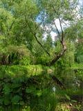 Arbres verts sur le rivage d'un étang pittoresque Photos libres de droits