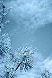 Arbres vitrés belle par glace après tempête d'hiver Image stock