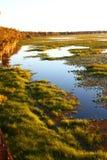 arbuckle λίμνη της Φλώριδας Στοκ εικόνα με δικαίωμα ελεύθερης χρήσης