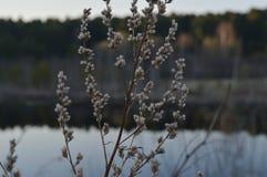 Arbuste avec de petites fleurs Photo stock