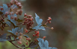 Arbuste avec les bourgeons fermés Image stock