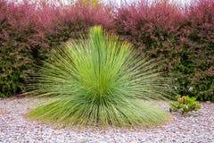 Arbuste dans les jardins botaniques royaux Victoria photographie stock libre de droits