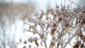 Arbuste en hiver pendant une tempête de neige banque de vidéos