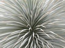 Arbuste en tuyau 3 Photos libres de droits