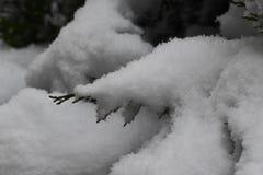 Arbuste sous le sort de neige Photos libres de droits