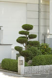 Arbuste taillé ornemental Photo libre de droits