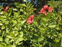 Arbuste vert avec les fleurs oranges image stock