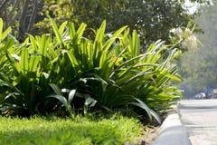 Arbustes à la lumière du soleil Images libres de droits