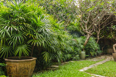 Arbustes d'excelsa de Rhapis en parc au printemps Photo libre de droits