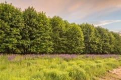 Arbustes et arbres sur le fond de loup sauvage Photo stock