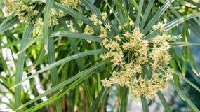 Arbustes fleurissants jaunes Photographie stock libre de droits
