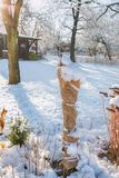 Arbustes protégés contre l'hiver du jute Photographie stock