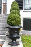 Arbustes ronds dans une rangée photo libre de droits