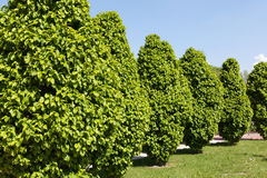 Arbusti Fotografia Stock
