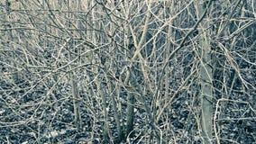 Arbusti astratti fotografia stock libera da diritti