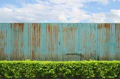 Arbusti con la rete fissa dello zinco su cielo blu Fotografia Stock