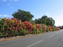 Arbusti del bordo Fotografia Stock Libera da Diritti