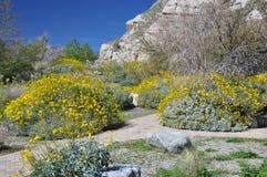 Arbusti del deserto Immagine Stock Libera da Diritti