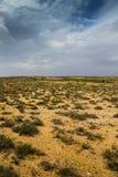 Arbusti del deserto australiano sopra un cielo tempestoso di inverno Fotografie Stock