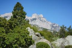 Arbusti dell'albero e del sempreverde del thuja sulle rocce davanti al fondo della montagna di Ai-Pétri, Crimea Fotografia Stock Libera da Diritti