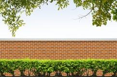 Arbusti e rete fissa del mattone Immagine Stock Libera da Diritti