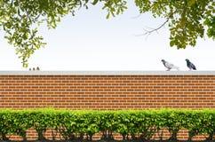 Arbusti e rete fissa del mattone Immagini Stock Libere da Diritti