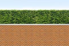 Arbusti e rete fissa del mattone Immagini Stock