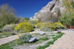 Arbusti nel deserto Fotografie Stock