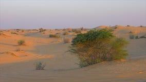 Arbusti selvatici di verde del paesaggio che crescono in colline e dune di sabbia in deserto caldo video d archivio