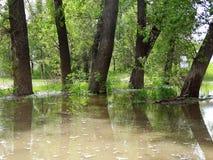 Arbusti sommersi durante l'alta marea sul fiume Fotografie Stock Libere da Diritti