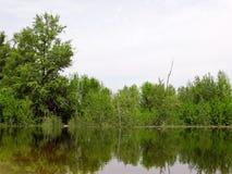 Arbusti sommersi durante l'alta marea sul fiume Fotografie Stock
