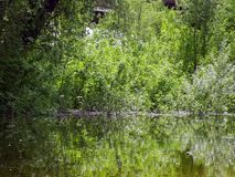 Arbusti sommersi durante l'alta marea sul fiume Fotografia Stock