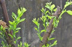 arbusto Foto de Stock