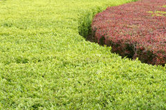 Arbusto Fotografía de archivo