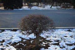 Arbusto Fotos de archivo libres de regalías