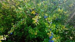 arbusto Foto de archivo libre de regalías