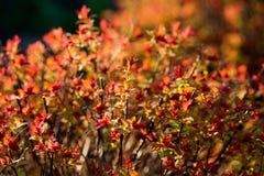 arbusto Imagen de archivo