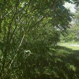 arbusto Foto de Stock Royalty Free