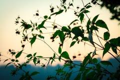 arbusto Fotos de archivo