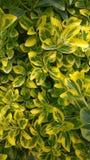 arbusto Foto de archivo