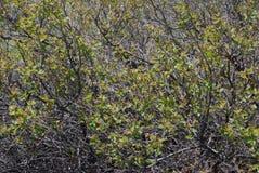 arbusto Fotografia de Stock
