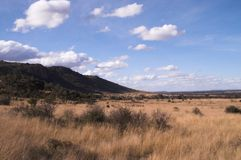Arbusto africano bajo el cielo azul. imagen de archivo libre de regalías