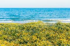 Arbusto amarelo das flores na frente da praia do mar Mediterrâneo em spain durante o dia de verão Imagem de Stock