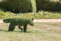 Arbusto animal tradicional do topiary Escultura do Fox como um ornam do jardim Imagem de Stock