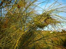 Arbusto atado Fotografia de Stock Royalty Free