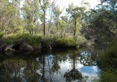 Arbusto australiano refletido em um billabong Foto de Stock Royalty Free
