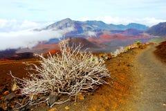 Arbusto blanco en el volcán Fotografía de archivo libre de regalías